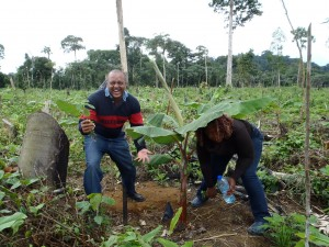 The first banana trees in Odin Oto !!!